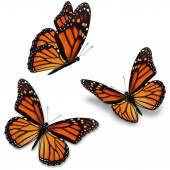 uralkodó pillangó
