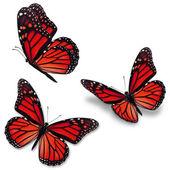 piros uralkodó pillangó