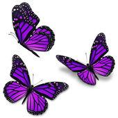 lila uralkodó pillangó