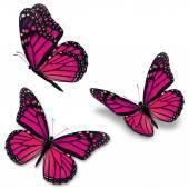 rózsaszín uralkodó pillangó