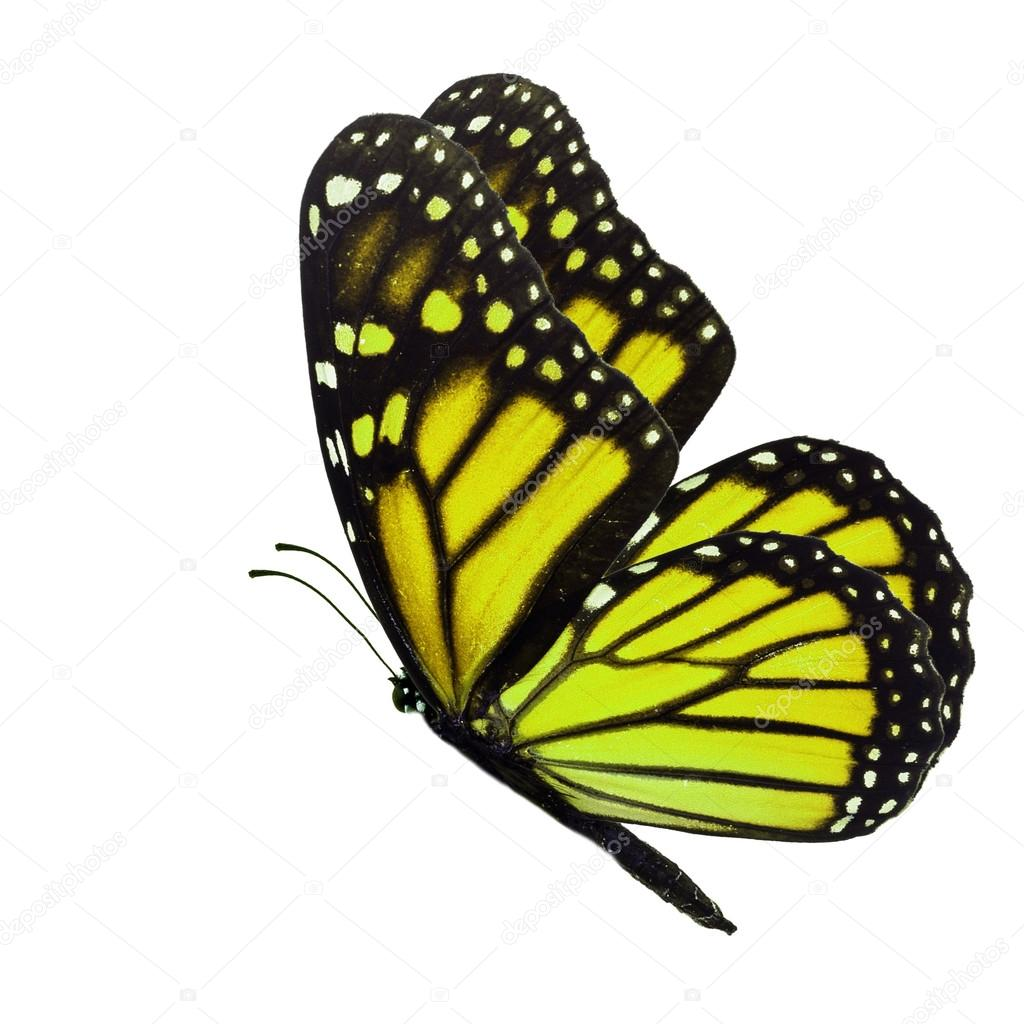 Butterflies Flowers Vector Art & Graphics | freevector.com
