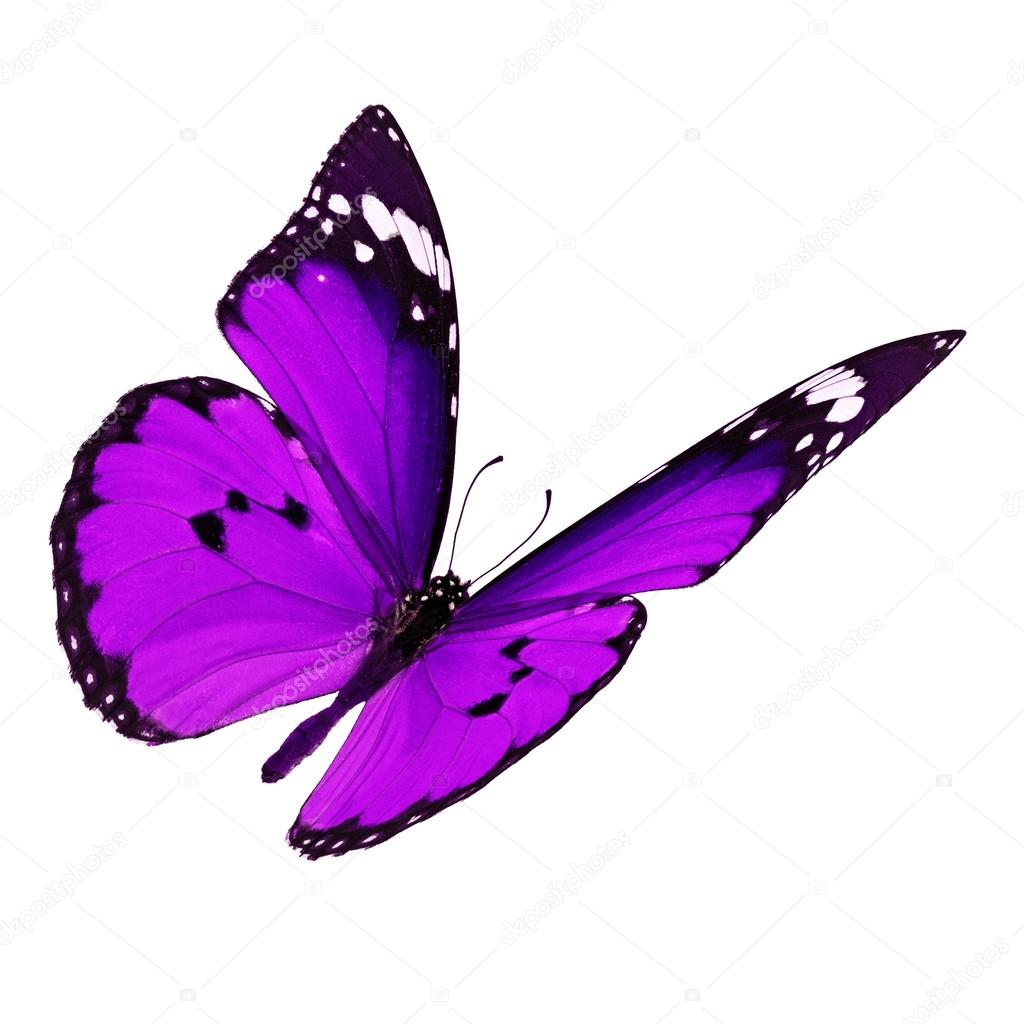 Image Result For Butterfly Spirit Animal Totem