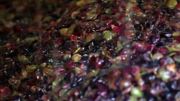 closeup of grapes in wine making process