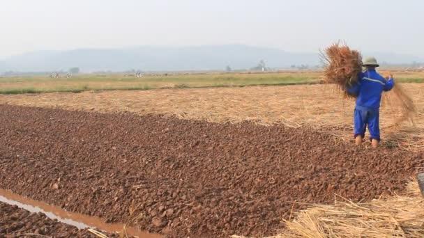 Hai Duong Viet Nam Le 18 Octobre Agriculteurs Cultiver Des