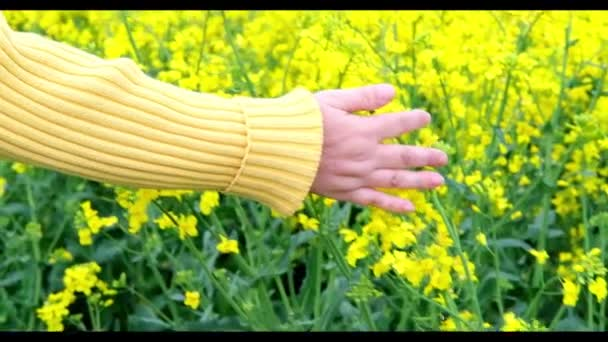 yellow rapeseed field, female hand, natural, environmental concept, vegetable oil production stage for products, machines, mechanisms, background for the designer for postcards, wallpapers