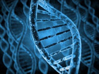 DNA Molecules model