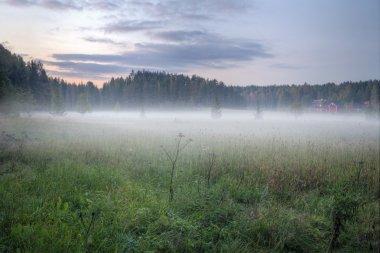 Foggy green meadow