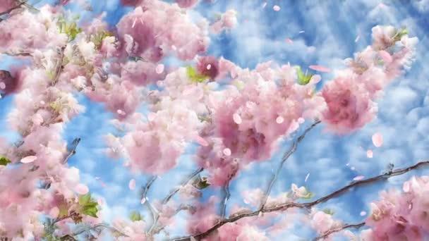 Flowering cherry background and falling petals loop