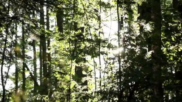 jezdec výstřel v sunny forest