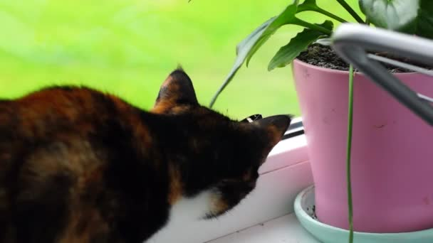 Curious cat and butterfly