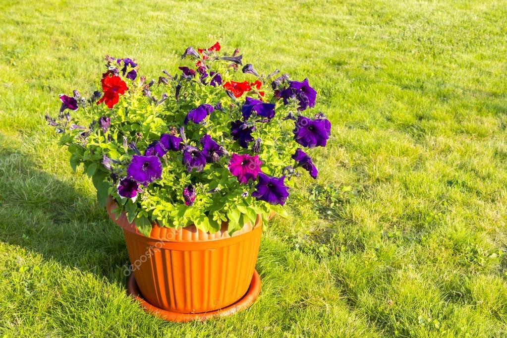 Frische Blumen im Topf draußen — Stockfoto © sgorin #120860056