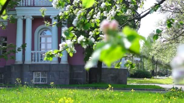Schlossgarten in der Sommerstadt