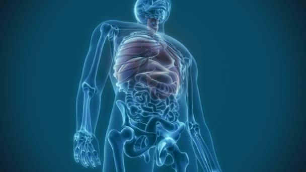 vnitřní orgány - bolesti plíce