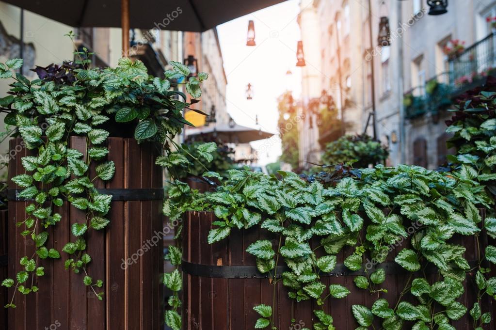 Decoratie van groene bladeren op een terras u stockfoto timonko