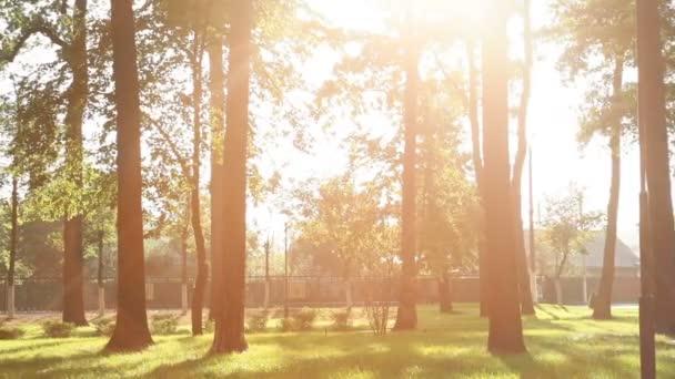 nádherný západ slunce v letním parku