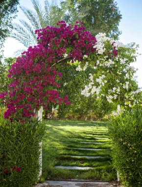 arch of pink bougainvillea flowers