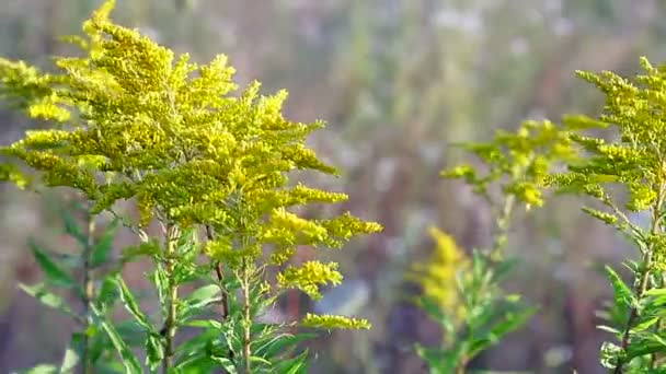 Krásná žlutá kytice na hřišti