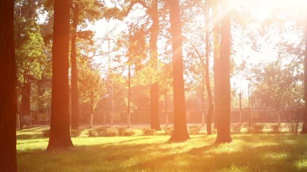 schöne Sonnenstrahlen bahnen sich ihren Weg durch die Bäume