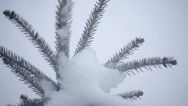 snowy winter tree in a park