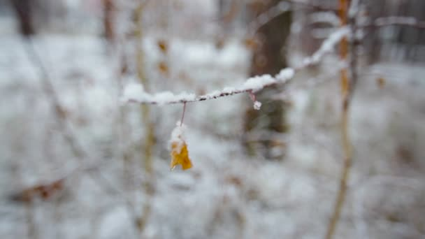snow-covered branch with leaves in the winter forest