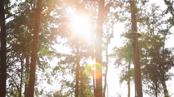 Zelená krajina s paprsky slunce, které svítí skrz větve stromů