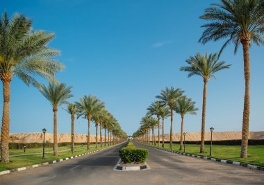 Highway with palm trees in Egypt