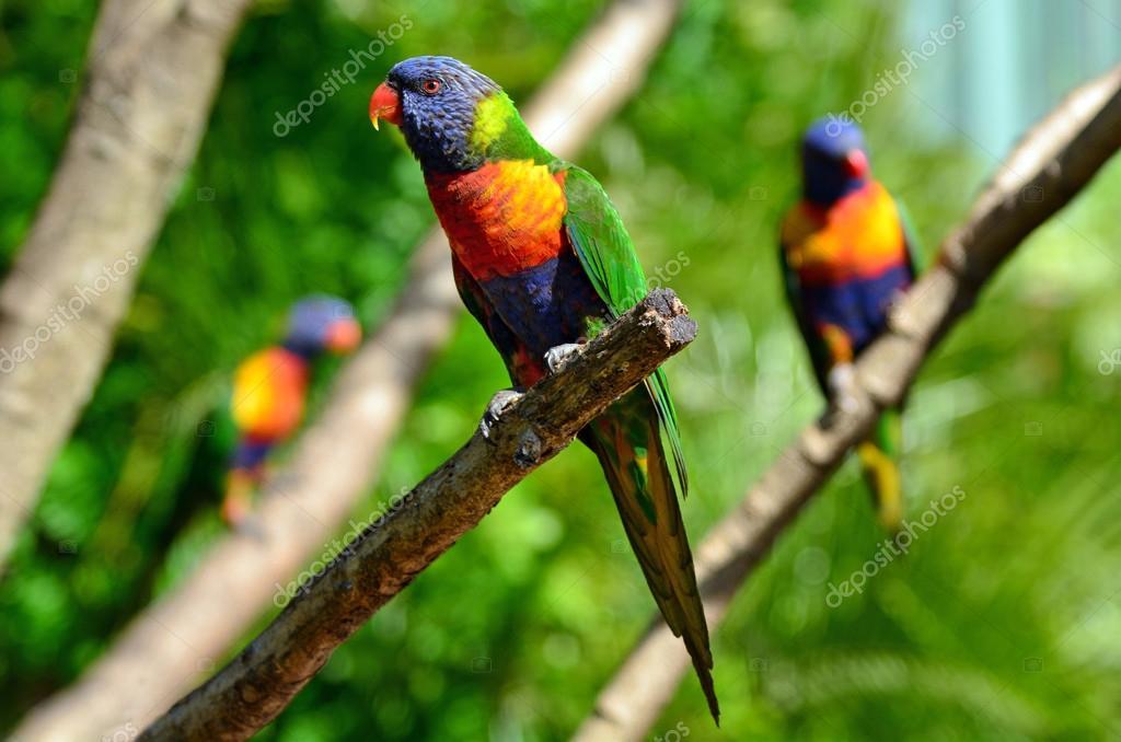 Australian Parrots Price in Pakistan