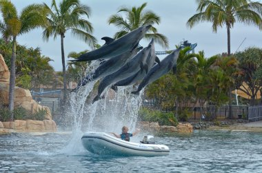 Dolphin show in Sea World Gold Coast Australia