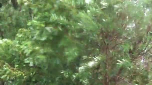 Stromy se kymáceli v bouři
