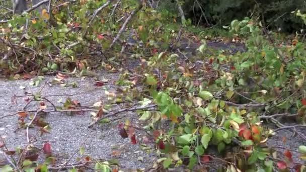 man cutting a storm damaged tree