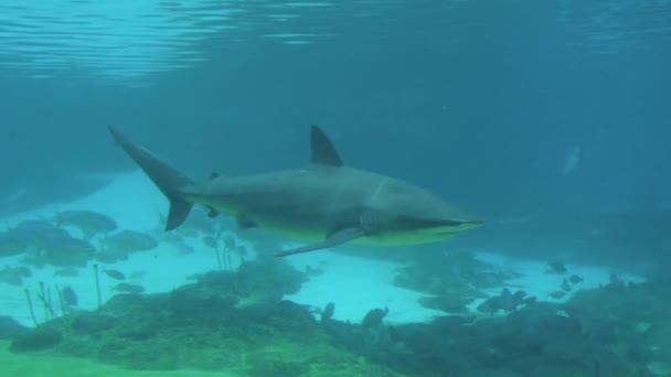 cápa úszik a víz alatt