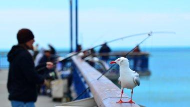 New Brighton Pier Christchurch - New Zealand