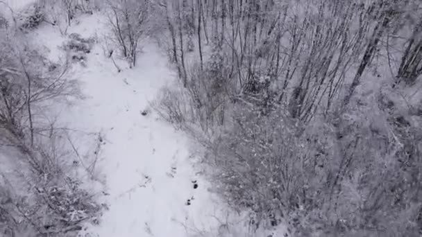 Drohnenaufnahmen eines wunderbaren Winters mit frostiger frischer Luft. Flug über Mischwälder. Bäume mit Schnee und Raureif bedeckt