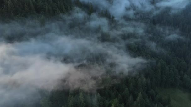 Amazing inspirational epic drone footage of wild green pine forest high in mountains during morning misty, protected national park or reserve. Clouds roll over peaks. Wanderlust destination concept