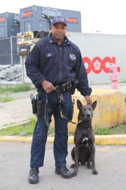 NYPD transit bureau K-9 police officer and Belgian Shepherd K-9 Sam providing security during Fleet Week 2015 in New York
