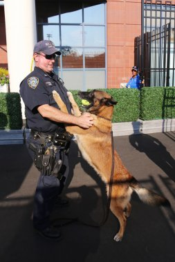 NYPD transit bureau K-9 police officer and Belgian Shepherd K-9 Wyatt providing security  during US Open 2015