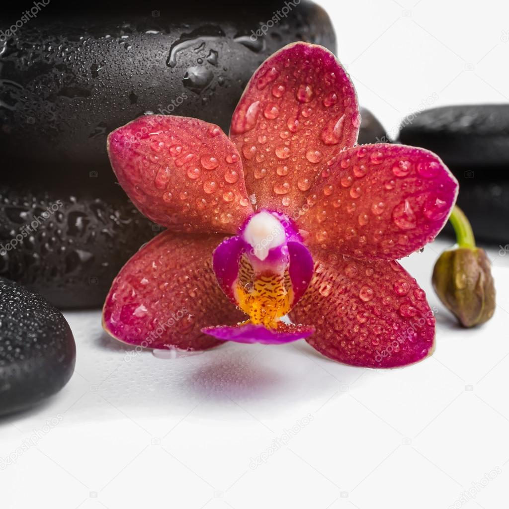 pile black zen stones and red orchid, phalaenopsis on white back