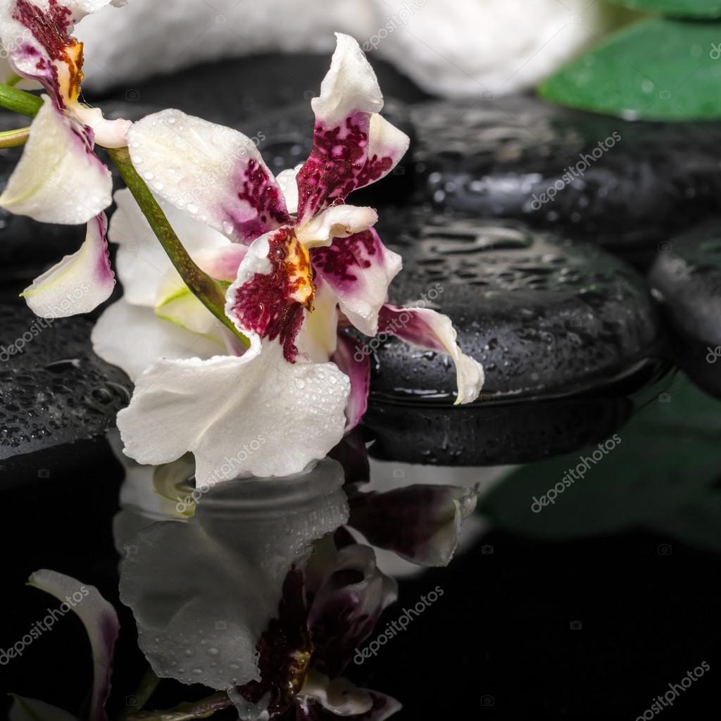 cuidado de la salud concepto de orqudea cambria flor verde hoja