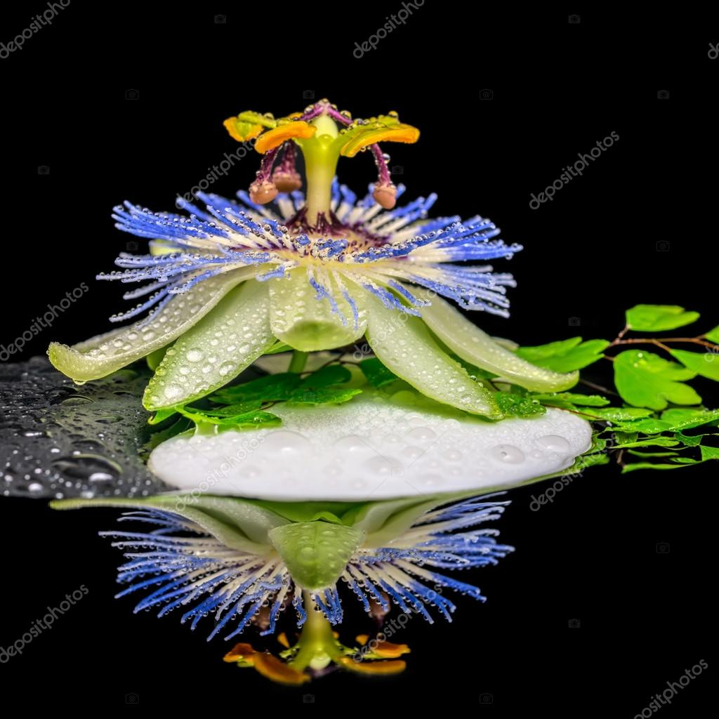 spa concept of stone texture symbol Yin Yang, passiflora flower