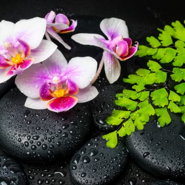 Spa background of white with red orchid (mini phalaenopsis) flow