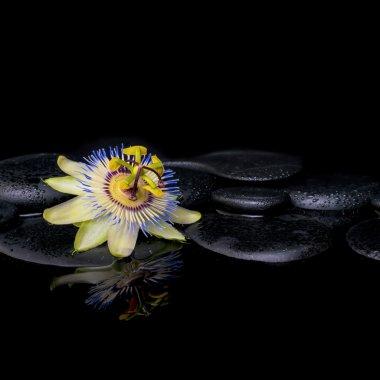 spa still life of passiflora flower on zen stones with reflectio