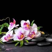 Fényképek gyönyörű spa csendélet, zöld és lila orchidea phalaenopsis