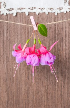 Fuchsia flowers handing on rope with clothespin on wooden and la