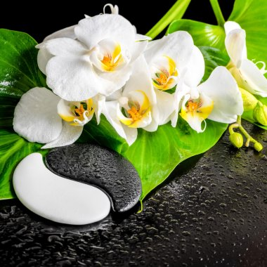 spa concept of white orchid flower, phalaenopsis, green leaf wit