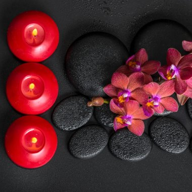 top down spa setting of blooming twig red orchid flower, phalaen
