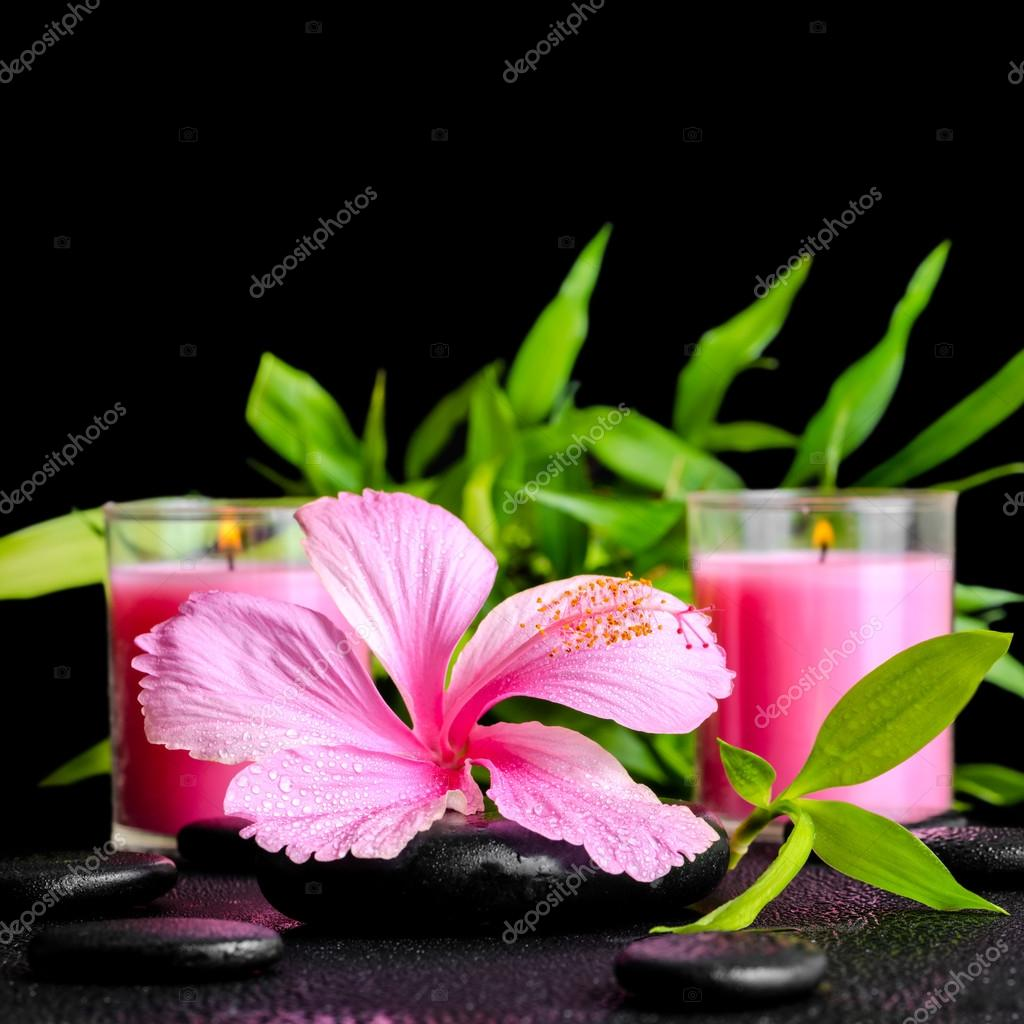 beautiful spa still life of pink hibiscus flower, twig bamboo an