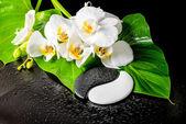 Spa koncept bílý květ orchideje, phalaenopsis, zelená listová vtip
