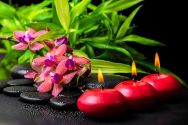 beautiful spa still life of blooming twig red orchid flower, pha