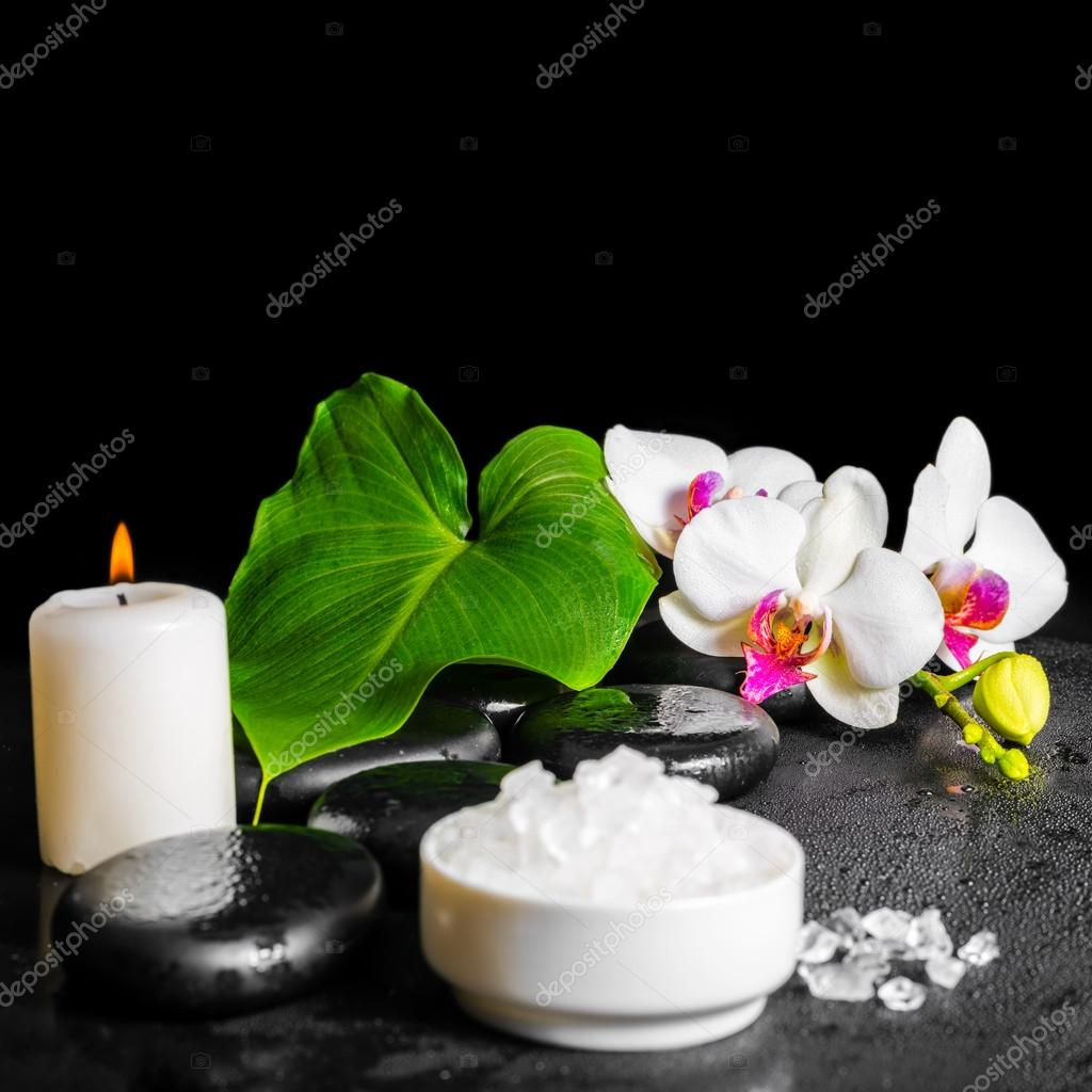 Concept De Spa Beaute De Blanche Fleur D Orchidee Phalaenopsis