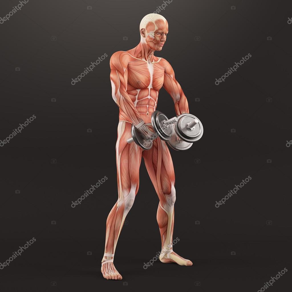 Ejercicio de gimnasio de musculación. Crianza de mancuernas estando ...